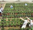 Mô hình nhà lưới sản xuất rau an toàn – hướng phát triển mới ở Vị Xuyên