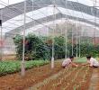 Đà Lạt tiên phong trong lĩnh vực ứng dụng nông nghiệp công nghệ cao vào du lịch