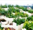 Thu 2 triệu mỗi ngày từ trồng dưa pepino