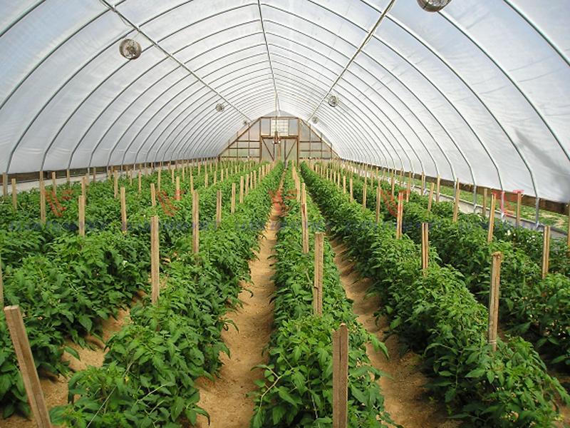Kinh nghiệm trồng rau màu trong mùa mưa