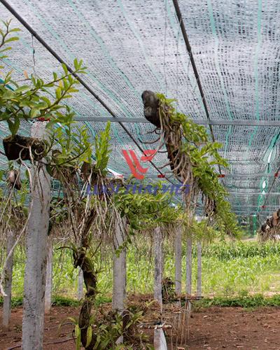 Lưới che nắng vườn lan