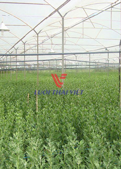 Nhà lưới trồng rau sạch