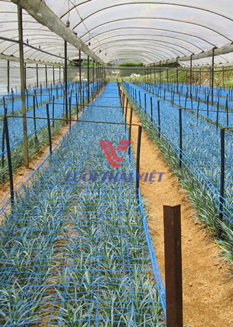 Lưới đỡ cây trồng